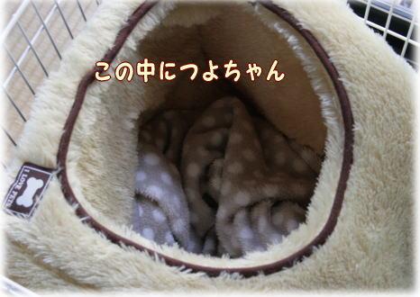 tuyoshi11.jpg