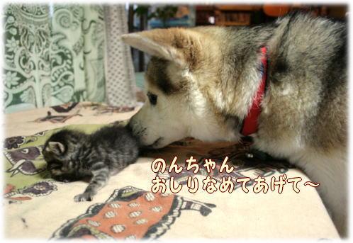 tuyoshi12.jpg