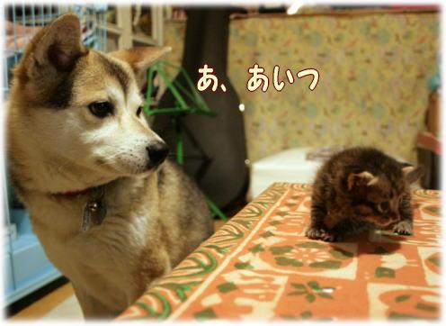 tuyoshi14.jpg