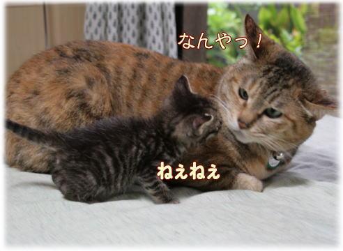 tuyoshi16.jpg