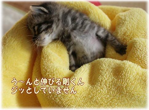 tuyoshi3.jpg