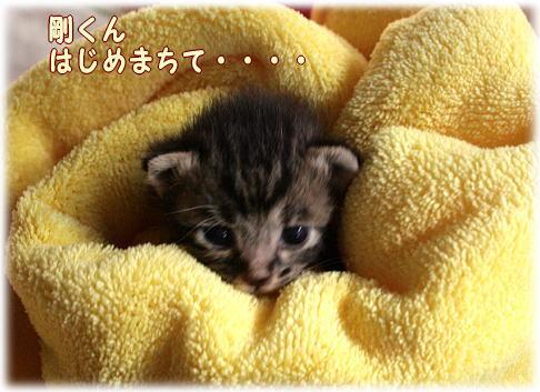 tuyoshi4.jpg