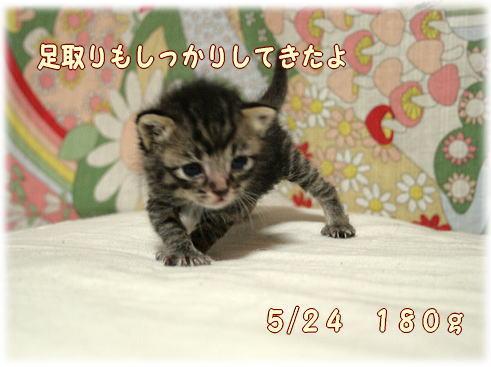 tuyoshi6.jpg