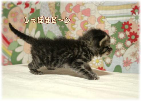 tuyoshi7.jpg