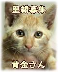 wannyankosatooya42.jpg