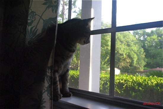 窓の秘密1
