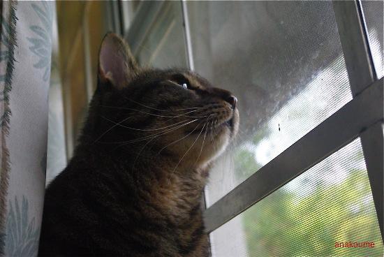 窓の秘密2