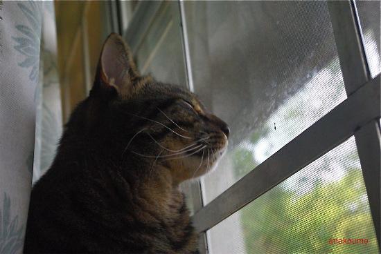 窓の秘密3