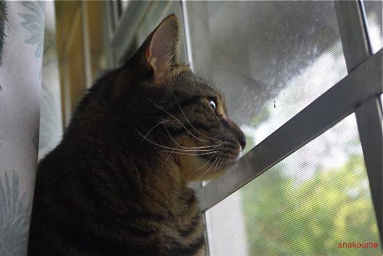 窓の秘密4