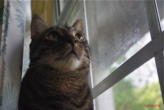 窓の秘密7