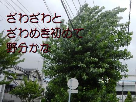 nowaki01.jpg