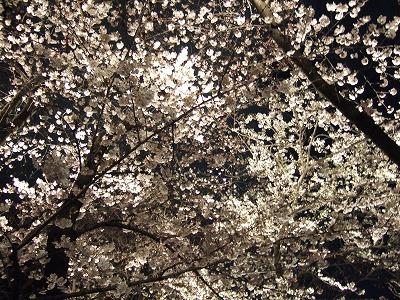 2010_0401夜桜能0084