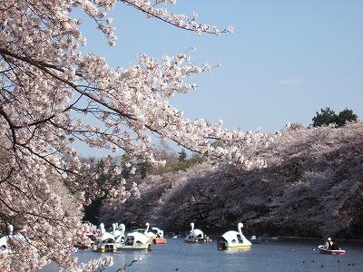 2010_0408井の頭公園桜0090