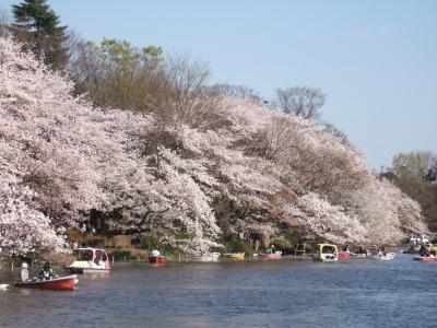 2010_0408井の頭公園桜0098