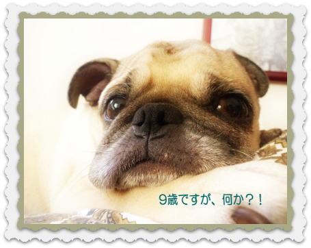 image1_20121027142155.jpg
