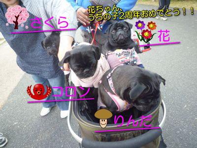 image1_20121111141800.jpg