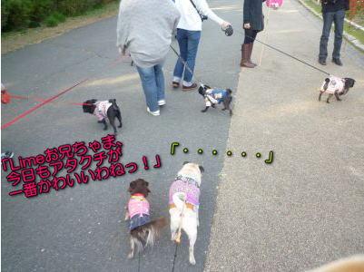image2_20121111145135.jpg