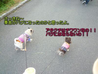 image3_20121111201038.jpg