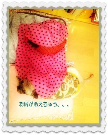 image6_20121027142332.jpg