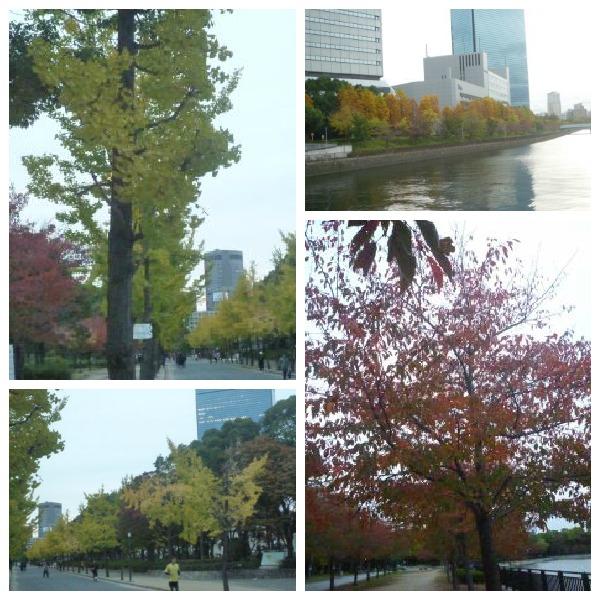 image_20121114214735.jpg