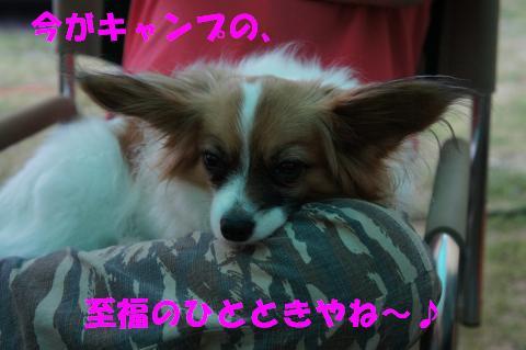 DSC00203_convert_20110509144004.jpg