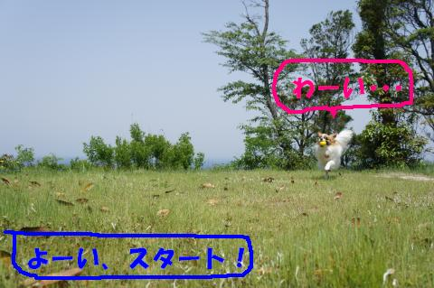 DSC00310_convert_20110524154608.jpg