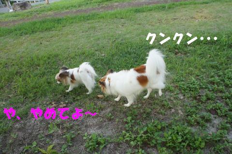 DSC00841_convert_20110901092937.jpg