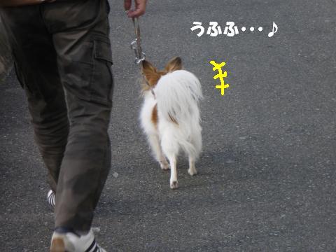 IMGP0042_convert_20120130131907.jpg