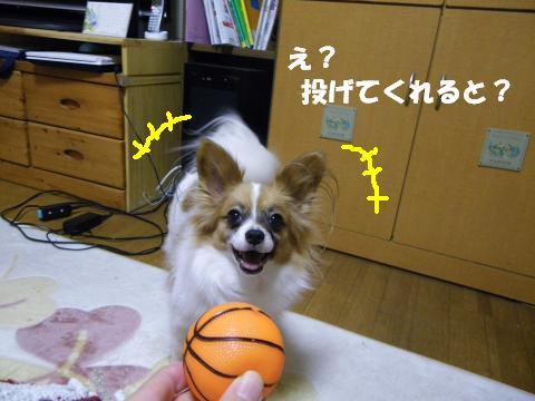 IMGP0113_convert_20120210152149.jpg