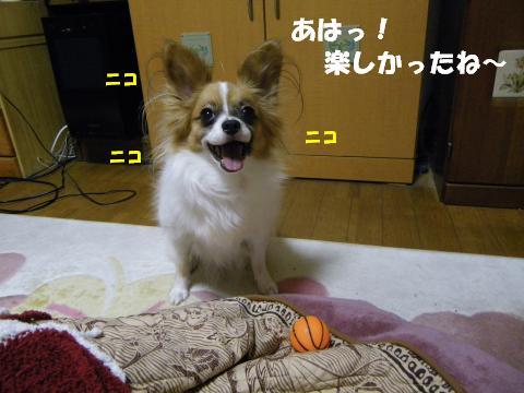 IMGP0118_convert_20120210152314.jpg