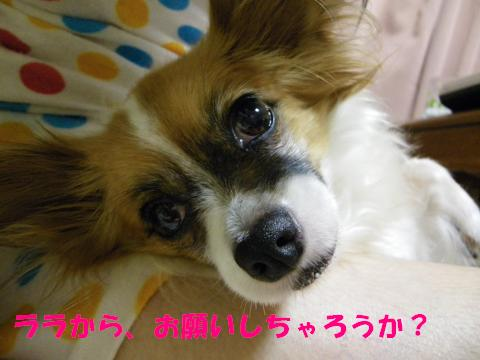 IMGP0417_convert_20110727144320.jpg