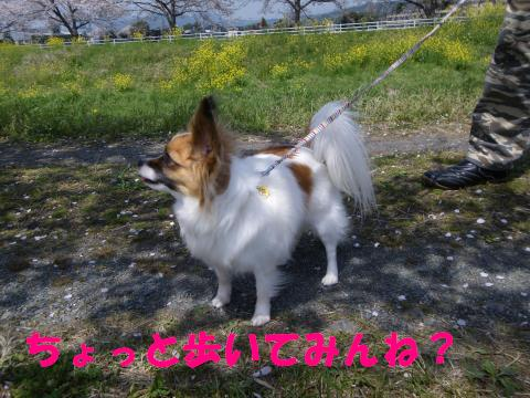IMGP1103_convert_20110411134439.jpg