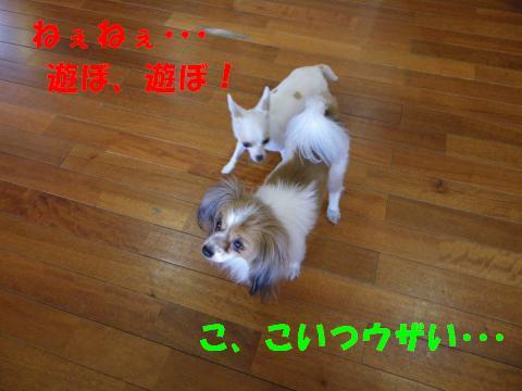 IMGP1196_convert_20110418105525.jpg