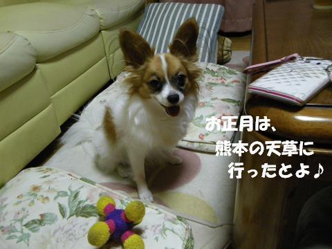 IMGP1316_convert_20120110102722.jpg