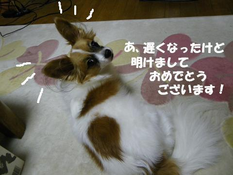 IMGP1321_convert_20120110102430.jpg