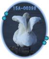 オオハクチョウ標識足環15A-00398