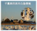 千葉県印西市白鳥情報