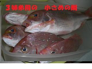 3姉弟用の鯛