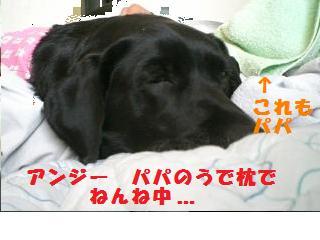 アンジー パパの腕枕