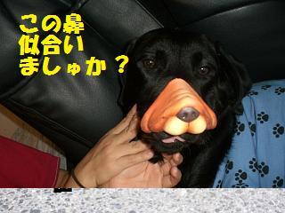 この鼻似合いましゅか?