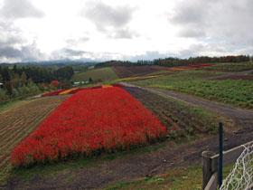 四季彩の丘2