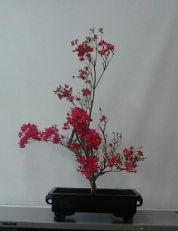 ツツジのお生花