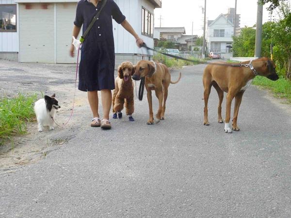 散歩中20130611a