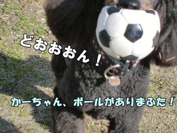 CIMG042820130108.jpg