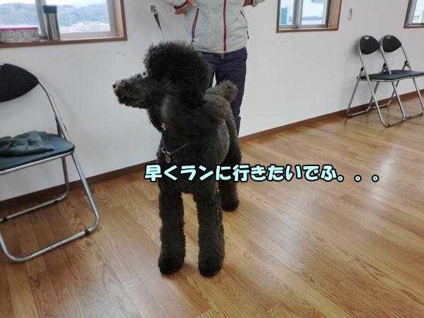 CIMG047320130111.jpg