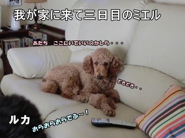 CIMG301920130830a.jpg
