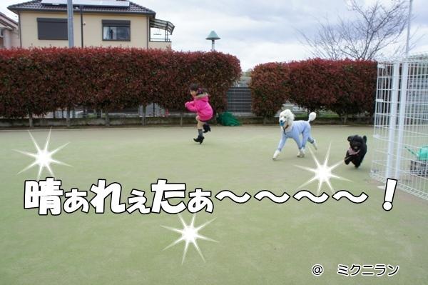 DSC0004620130408.jpg