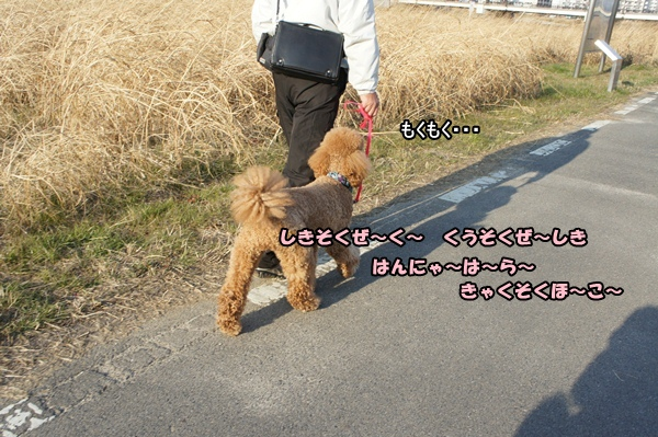 DSC0755720130121.jpg