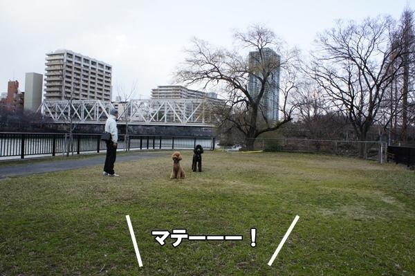DSC0880920130303.jpg