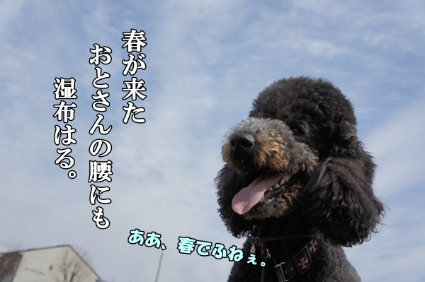 DSC0918320130316.jpg